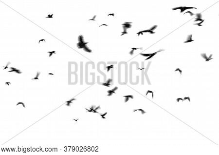 Silhouette Of Black Birds Crows Flies On A White Background. Photo With Motion Blur.  Isolated On Wh