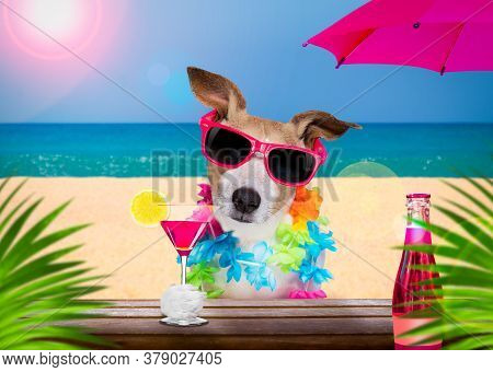 Jack Russell  Dog Wearing Sunglasses In Summer Vacation Holidays   With  Cocktail Drink Or Beverage