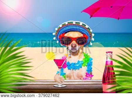 Chihuahua Dog  Wearing Sunglasses In Summer Vacation Holidays   With  Cocktail Drink Or Beverage   A