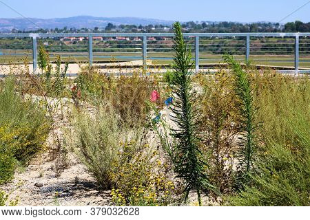 Water Resistant Chaparral Shrubs Surrounded By Sand On A Rooftop Patio Taken At A Drought Tolerant G