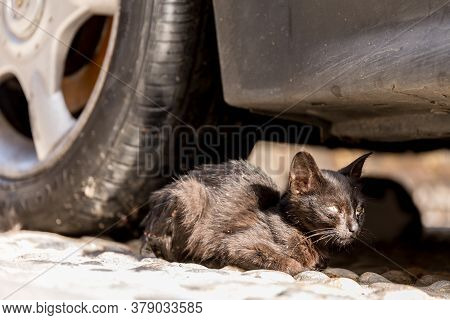 Dirty Stray Cat Hides In Its Refuge