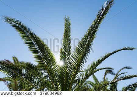 Palm Fronds In The Blue Sky In Backlight - Close-up