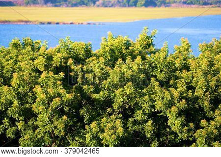 Lush Green Trees Besides A River Surrounded By Tallgrass Taken At An Estuary Within Newport Back Bay