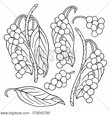 Hand Drawn Lemongrass. Set Of Objects. Cartoon Vector Abstract Illustration.