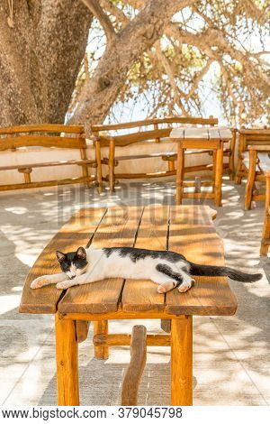 Cat Laying On The Table Of Outdoor Cafe In Preveli Monastery Garden, Crete, Greece
