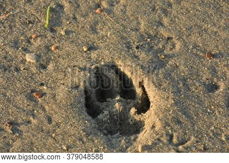 Impression Of A Paw Print Imprinted Into Beach Sand.