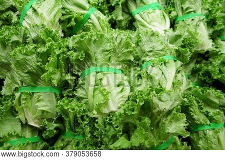 Close Up On Fresh Lettuce In Grocery Store For Sale