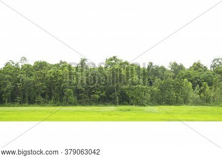 Trees Line Isolated On A White Background Thailand.
