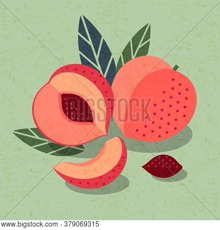 Peaches Illustration For Poster Or Packaging. Ripe Whole, Half Of Fruit And Sliced Peach With Bones