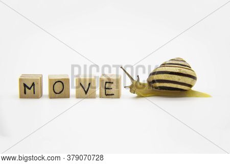 Striped Land Snail With Small Wooden Cubes With Letters Isolated On The White Background. A Word Mov