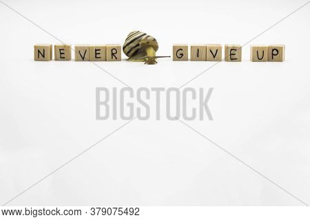 Striped Land Snail With Small Wooden Cubes With Letters Isolated On The White Background. A Words Ne