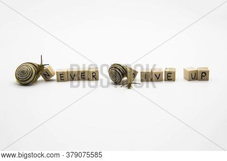 Striped Land Snails With Small Wooden Cubes With Letters Isolated On The White Background. A Words N