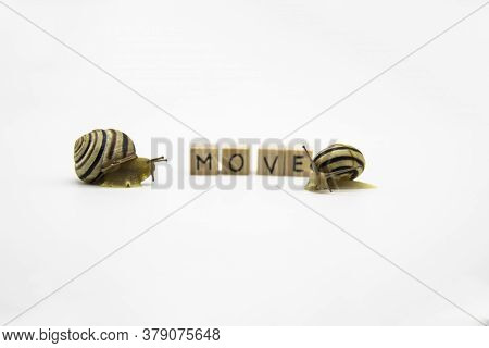 Striped Land Snails With Small Wooden Cubes With Letters Isolated On The White Background. A Word Mo