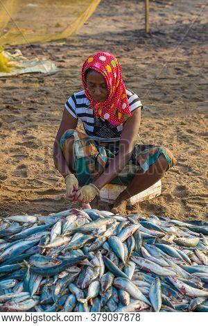 Negombo, Sri Lanka - February 03, 2020: Sri Lankan Woman Cleaning A Caught Fish In The Sand. Fish Ma