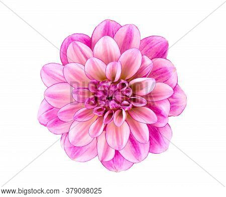 Dahlia Flower. Pink Dahlia Flower Isolated On White Background, With Clipping Path. Top View.