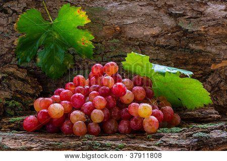 grape and foliage