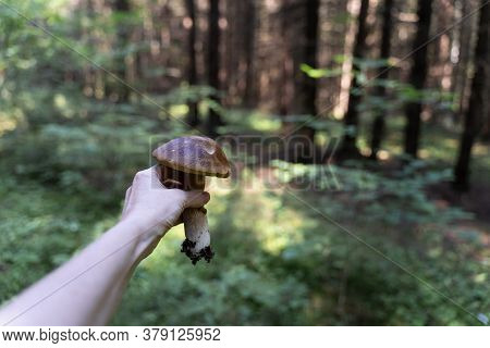 Porcini Mushroom In A Female Hand Of Mushroom Picker On A Green Forest Background