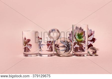 Stylish Set With Home Plant Distorted Trough Glass. Stylish Home Decor.home Gardening.