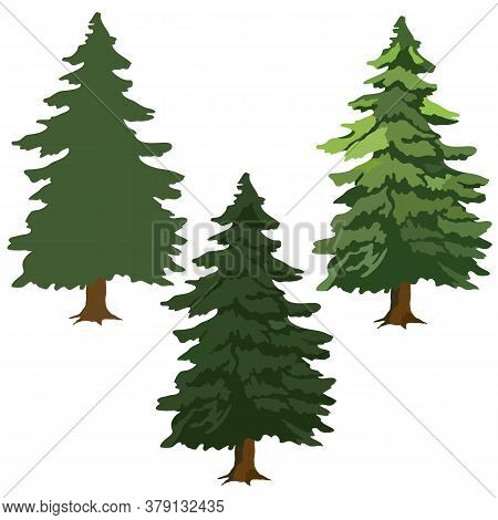 Fir Trees, Drawing Pictures, Green Fir Trees, Vector Illustration, Isolate On A White Background