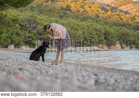Young Woman Training Her Black Shepherd Dog Using A Halti Leash Giving It A Gesture Command To Lay D