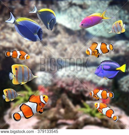 Underwater scene with beautiful tropical fish - hepatus; blue tang, clownfish. Mock up template. Copy space for text