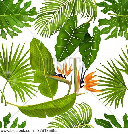 Tropic Leaves Pattern. Seamless Texture With Exotic Leaves Of Jungle Foliage, Monstera And Banana Pa