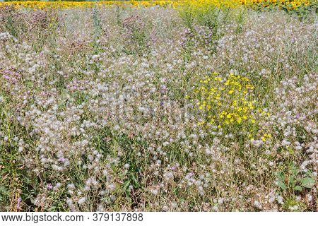 Meadow With Wildflowers In The Summer . Wildflowers In The Summer Meadow In Green Grass, Nature.