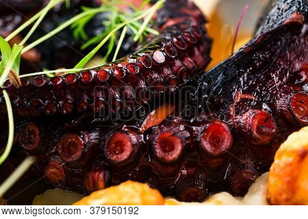Grilled Octopus Appetizer Food Concept. Seafood Meal Octopus Tentacle Fried. Restaurant Dish. Close-
