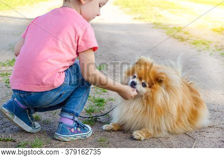 Preschooler Kid Girl Training, Playing With Dog On The Street. Baby Teaches Spitz Obedience. Child W
