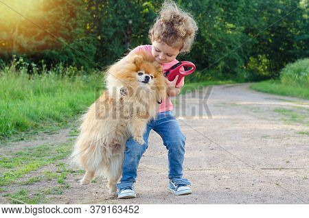Preschooler Kid Training, Playing With Dog Outdoors. Little Girl Takes The Spitz In Her Arms. Child