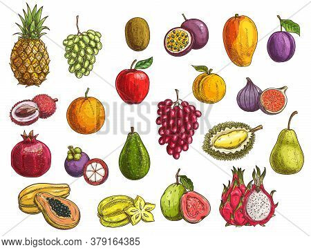Fruit And Berry Vector Sketches With Isolated Exotic And Garden Food. Mango, Papaya, Grapes And Appl