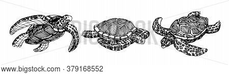 Set Of Swimming Sea Turtles In A Shell With Ornament, For Logo Or Emblem, Vector Illustration With B
