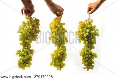 Large clusters of seedless white grapes