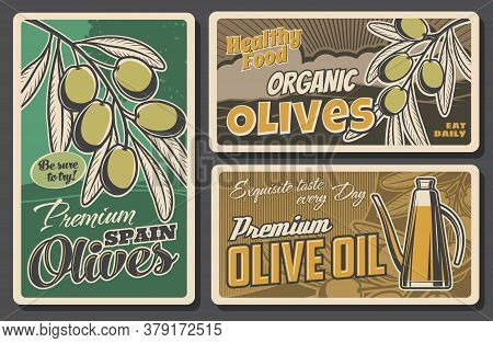 Olive Branch And Oil Bottle Retro Banners Of Vector Vegetable Food. Green Fruits Of Olive Tree And V