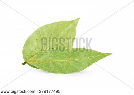 Bay Leaves Isolated On White Background Cook, Of, Product, Organic, Dry, Group, Green, Spice,