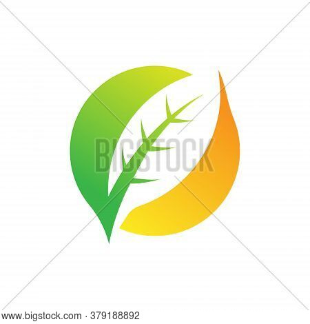 Leaf. Leaf Logo. Leaf vector. Leaf Logo vector. Leaves Logo. Leaf vector Logo. Vector Leaf Logo. Nature Leaf Logo. Leaf Logo design. Leaf Logo icon vector. Eco Leaf Logo. Leaf Sign. Leaf Symbol. Leaf Logo vector design template illustration.