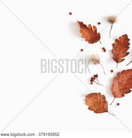 Autumn Composition. Dried Leaves, Flowers, Rowan Berries On White Background. Autumn, Fall, Thanksgi