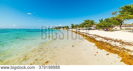 Turquoise Sea And Palm Trees In Raisins Clairs Beach In Guadeloupe, French West Indies. Lesser Antil