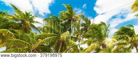 Palm Trees And Blue Sky In Guadeloupe, French West Indies. Lesser Antilles, Caribbean Sea