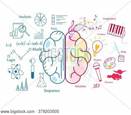 Human Brain Concept Contour Linear Style Include Of Imagination, Analysis, Logic And Dreams. Vector