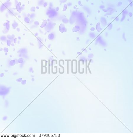 Violet Flower Petals Falling Down. Exotic Romantic Flowers Falling Rain. Flying Petal On Blue Sky Sq