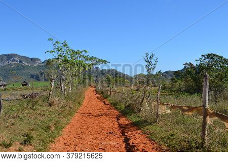 Hiking Path Through The Valley Of Vinales, Passing Coffee Plantations In Cuba