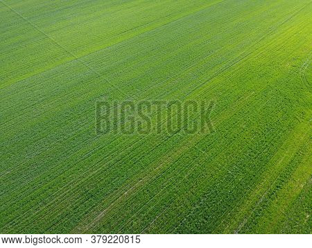 Green Agricultural Field, Aerial View. Farmland Landscape. Background.