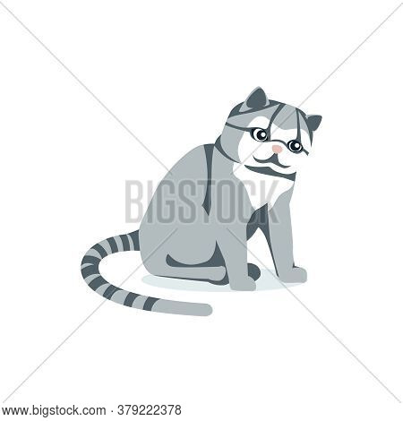 Cute Fluffy Gray Cat With Striped Tail. Lovely Sitting Domestic Pet Animal Cartoon Vector Illustrati