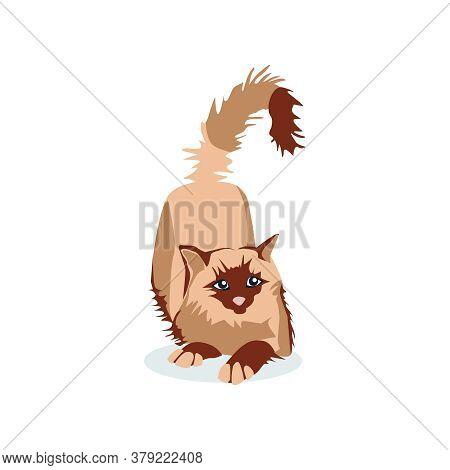 Cute Cat Of Siamese Birman Breed. Adorable Fluffy Domestic Animal Lying On Floor Cartoon Vector Illu
