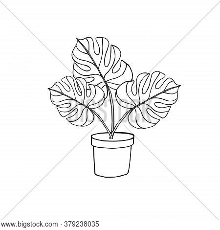 Vector Hand Drawn Doodle Sketch Monstera In Pot Isolated On White Background