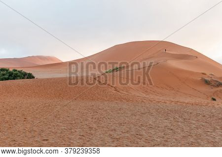 View Of The Sickle Shaped Sand Dune Next To Sossusvlei. A Tourist Is Visible On The Dune