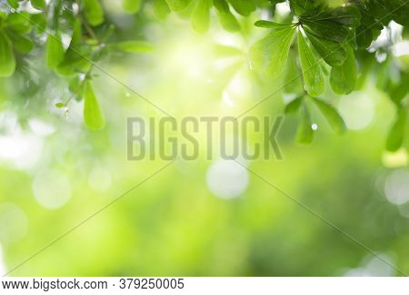 Close Up View Of Green Leaf On Greenery Blurred Background And Sunlight  In Garden Using For Natural