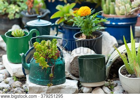 Reduce, Reuse, Recycle Planter, Craft Ideas. Second-hand Kettles, Saucepans, Old Teapots Turn Into G