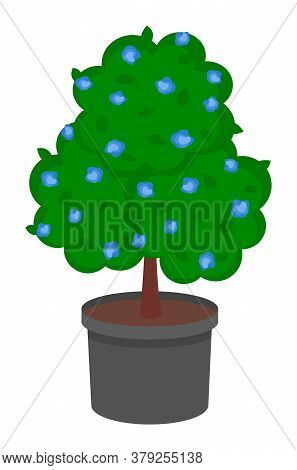 Isolated Green Tree Growing In Pot With Soil. Tree With Violet Flowers Isolated At White Background.